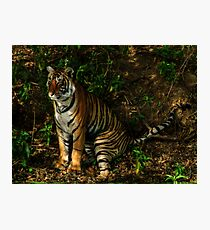 Paying homage to the Jungle King Photographic Print