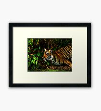 Paying homage to the Jungle King Framed Print