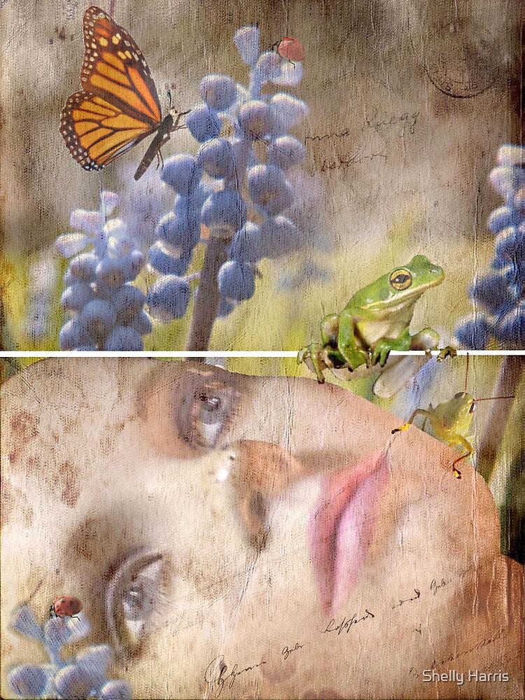 Feeling Spring by Shelly Harris