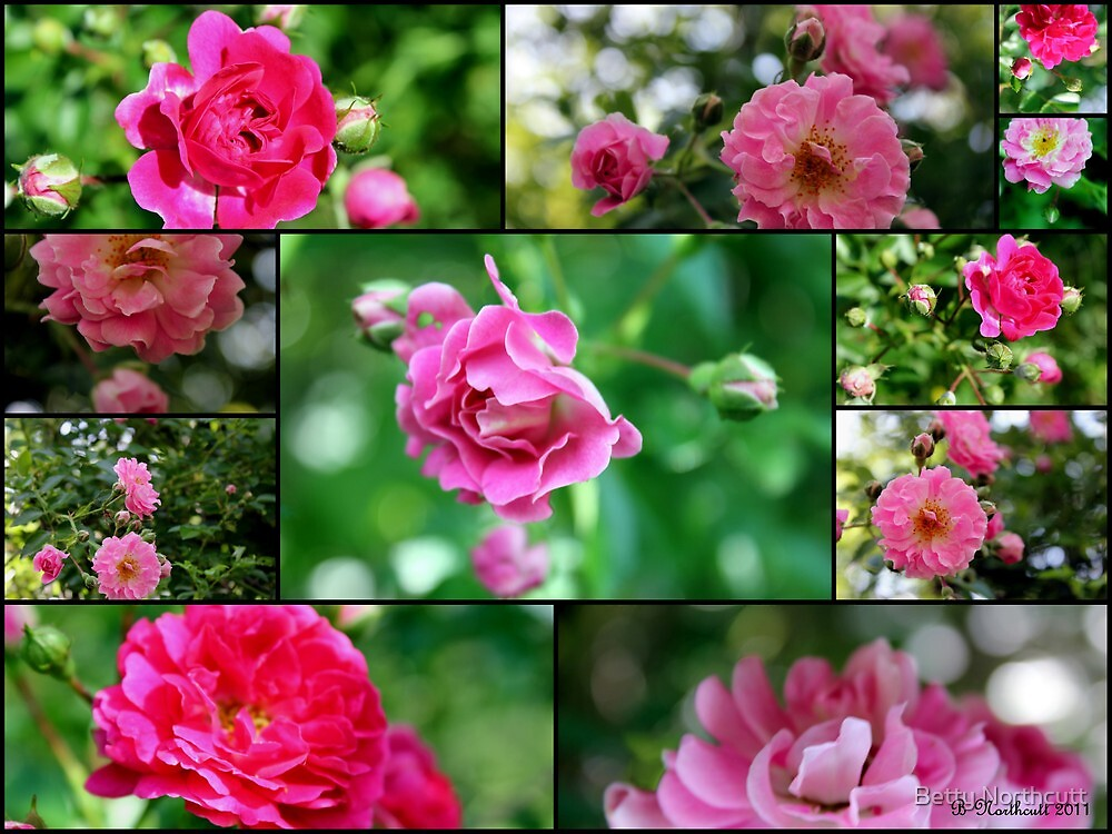 Wild Rose Collage - Small Beauties by Betty Northcutt