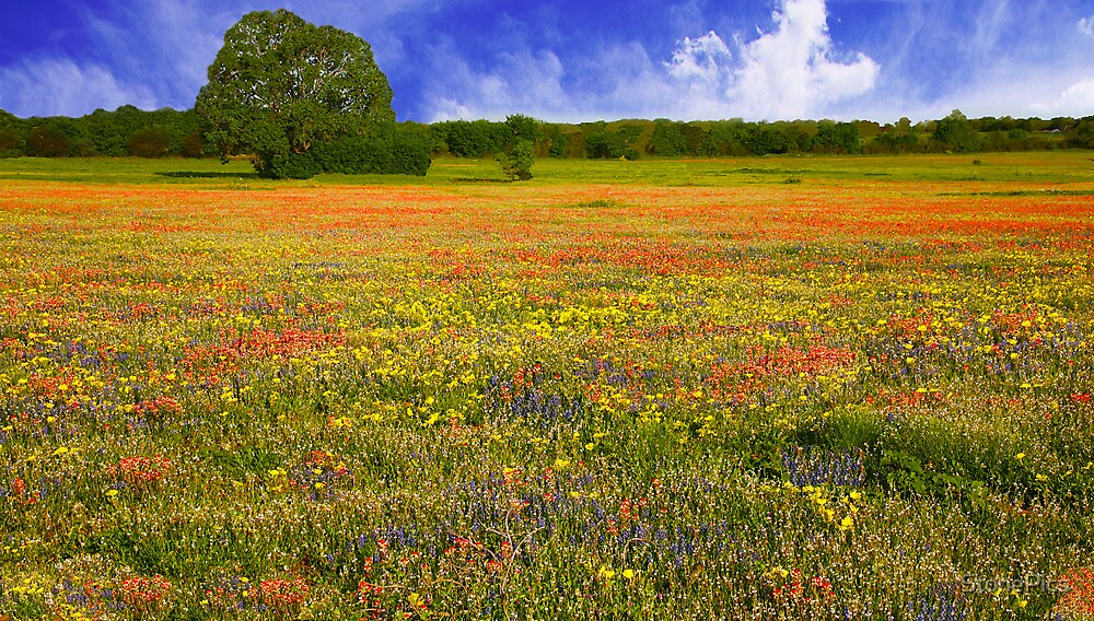 Field of Flowers in China Grove by StonePics
