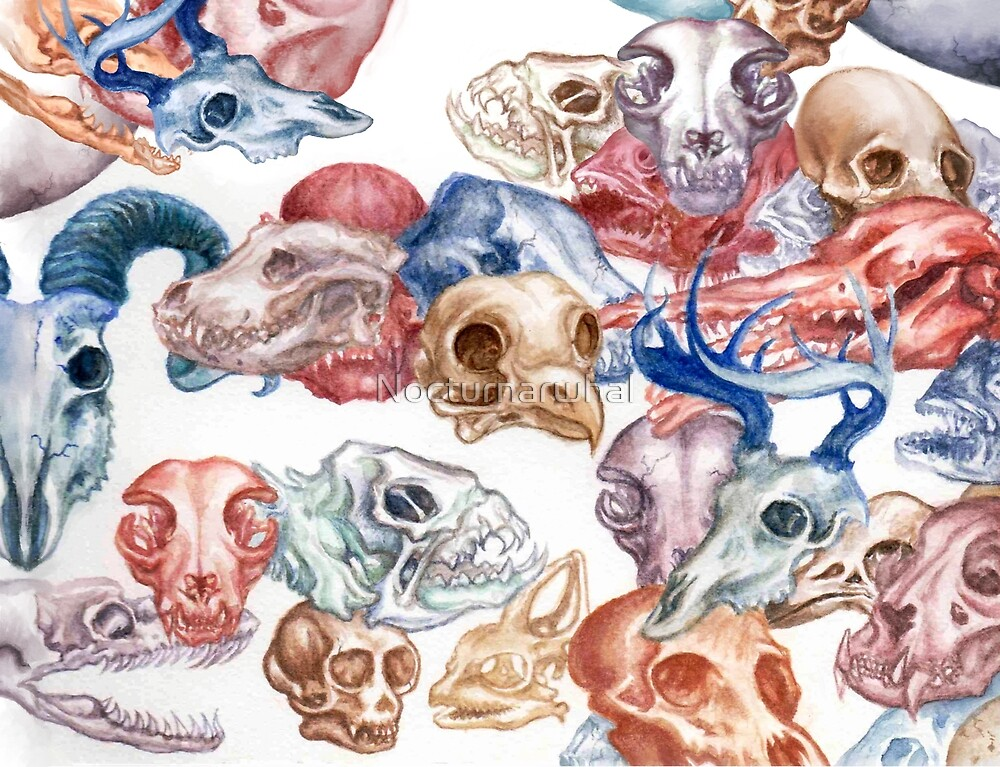 Skull Menagerie  by Nocturnarwhal