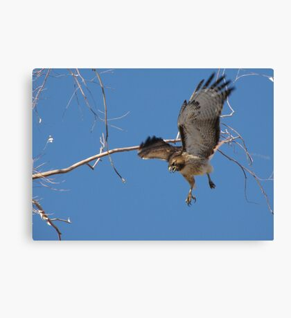 Red-tailed Hawk ~ Tactical Measures Canvas Print