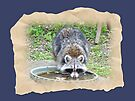 The Watering Hole by MotherNature