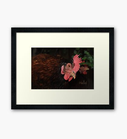 International Respect for Chickens day - May 4th Framed Print