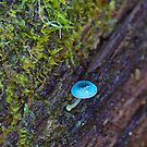 Fungus in the forest 7 -Mycena Interupta by Ron Co