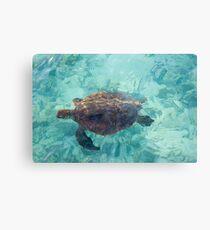 Green Turtle - Heron Island - Australia Metallbild