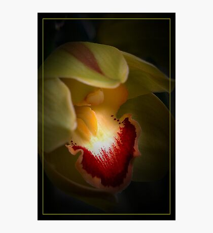 Pistacio Orchid Photographic Print