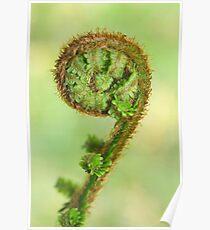 Scottish fern Koru Poster