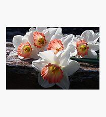 Beautiful Ladies Of Spring Photographic Print