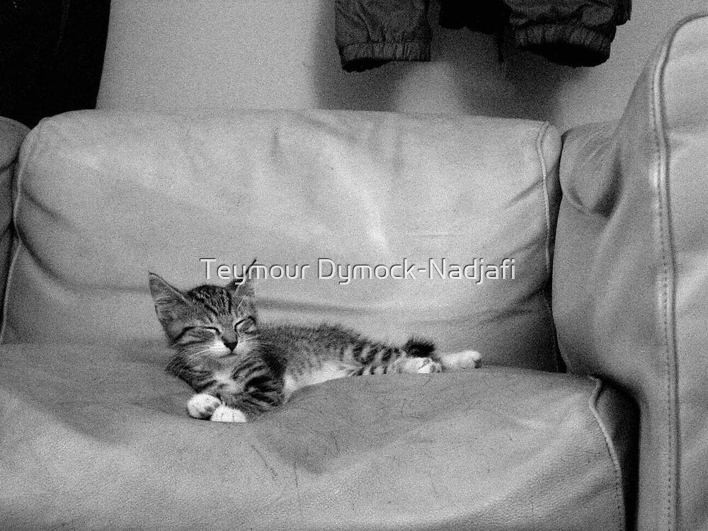 Sleeping Kitty by Teymour Dymock-Nadjafi