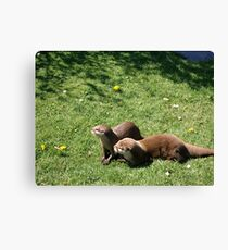 Otters at Knowlsey Safari Park, Uk Canvas Print