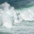 seabirds and wave by lukasdf
