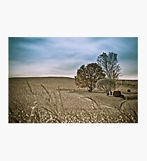 Agriculture lanscape Photographic Print