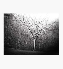 The Coat Hanging Tree Photographic Print