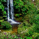 The Beauty Within : Rainbow Springs National Park by NatureGreeting Cards ©ccwri