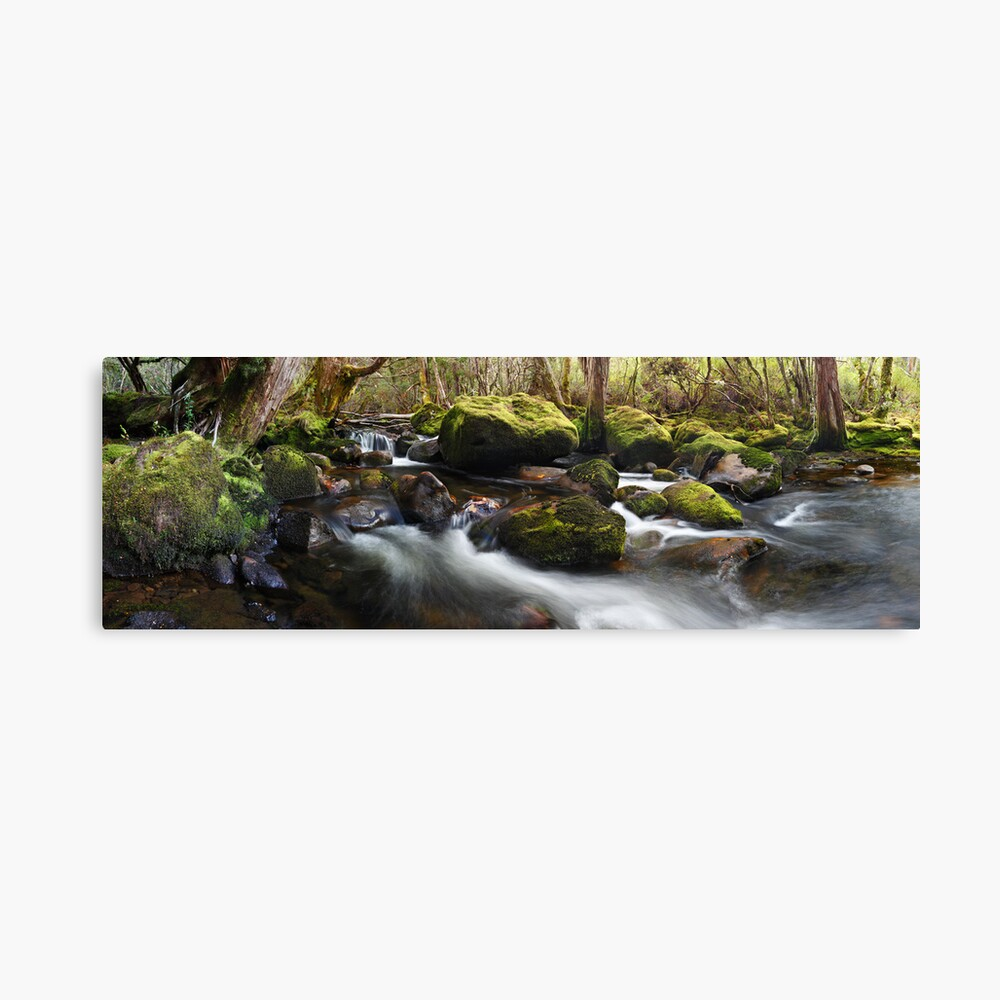 Pine Valley Stream, Lake St Clair National Park, Tasmania Canvas Print