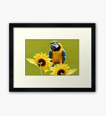 Blue-and-yellow macaw and sunflowers Framed Print
