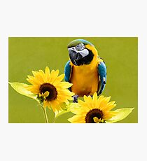 Blue-and-yellow macaw and sunflowers Photographic Print
