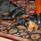 Sleeping buddies by Anthony Goldman