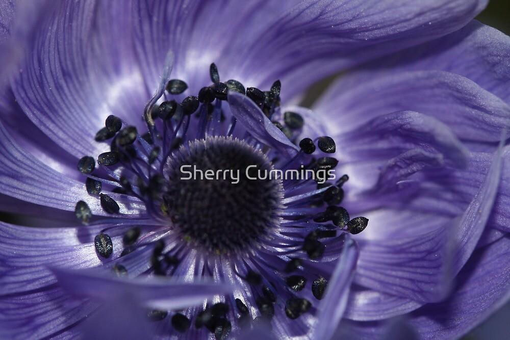 Got the blues by Sherry Cummings