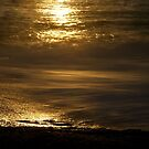 still water. tasmania, australia by tim buckley   bodhiimages
