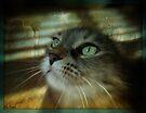 Nikki....My Angel In Heaven by jodi payne