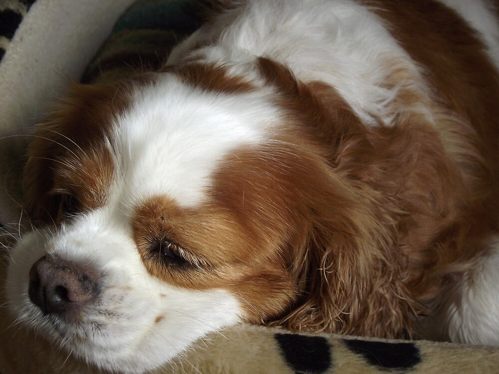 Maxi resting  by gaylene