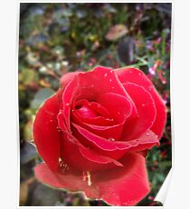 Rose From Eden Poster