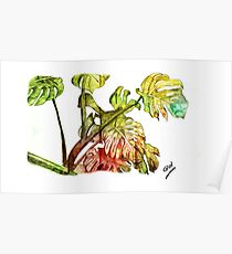 Pencil work Rubber Plant Poster