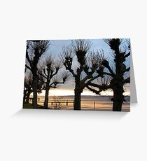 Witch Trees Greeting Card