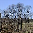Ragged Fences by Tracy Wazny