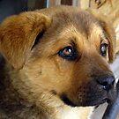 Comander:  Puppy Sweet! by PatChristensen