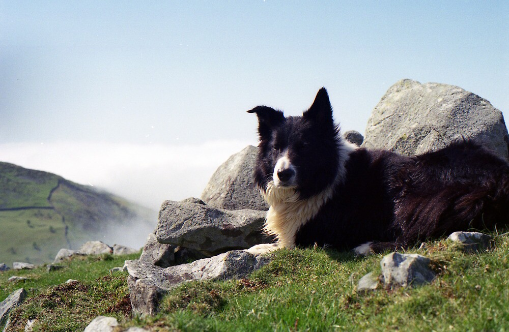 On the Mountain with Indy by Michael Haslam