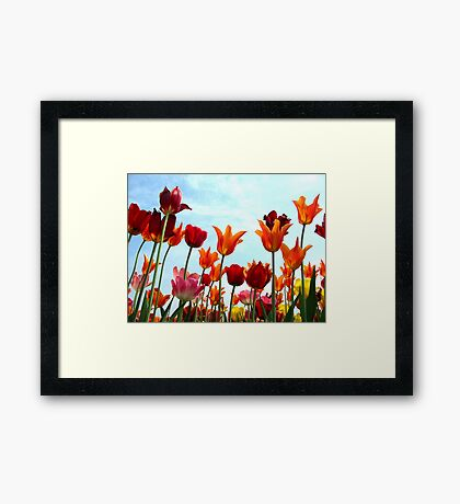 Colors in the sky Framed Print