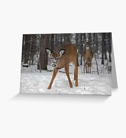 Curious Deer Greeting Card