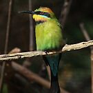 The Rainbow Bee Eater by Lance Leopold