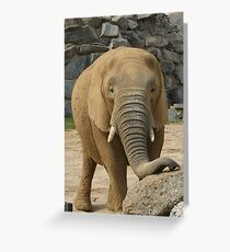 Dirty Elephant Greeting Card