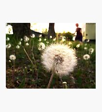 A thousand wishes Photographic Print