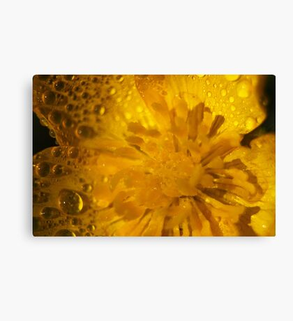butter cup dropletts  Canvas Print