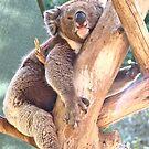Aussie Bears.... by Ali Brown