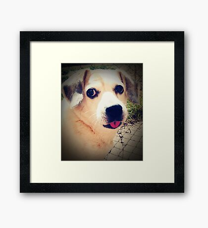 05-04-11:  One Dog's Opinion Framed Print