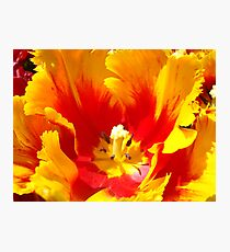 Yellow Red Tulip Flower art prints Floral Baslee Troutman Photographic Print