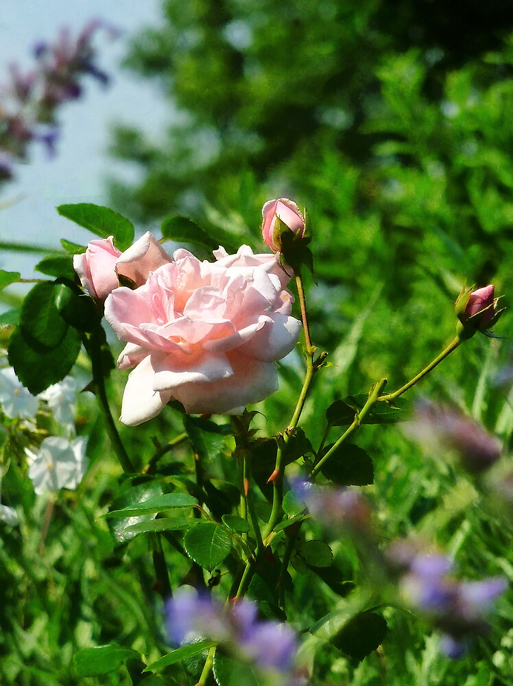 Roses in the Garden by Susan Savad