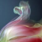 Tulip by RebeccaBlackman