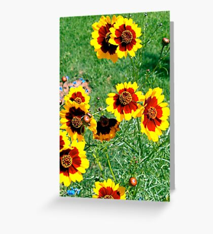 Bold yellow and brown wildflowers from seed Greeting Card