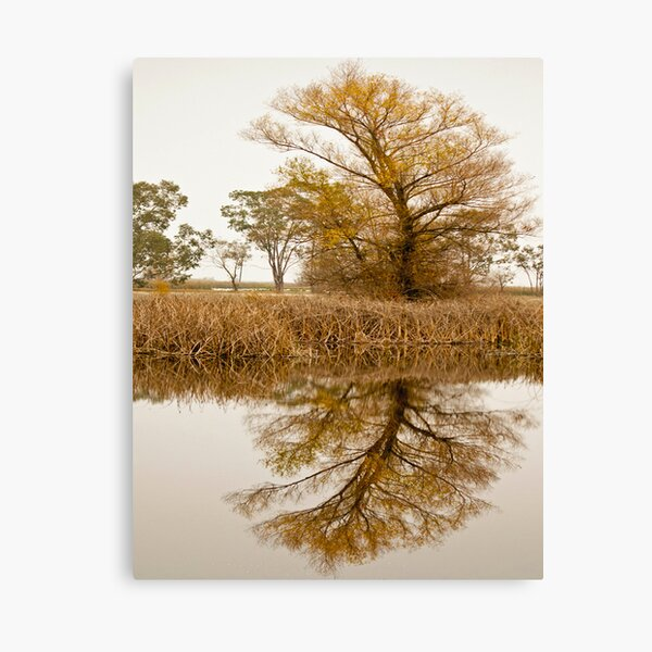 Reflection of a tree Canvas Print