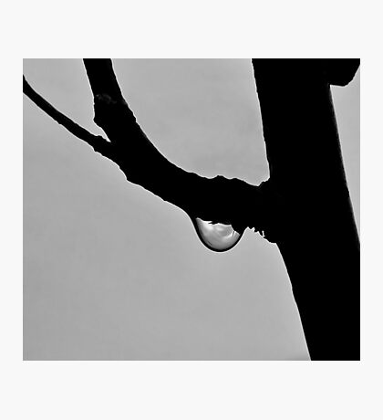 Droplet . Photographic Print