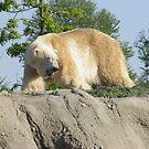 Polar Bear  by angeljootje