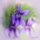 Violet by aMOONy